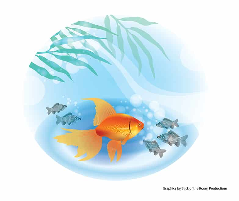 Being a big fish isn 39 t always better for Big fish little pond